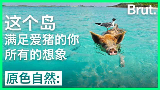 这个岛,满足爱猪的你所有的想象