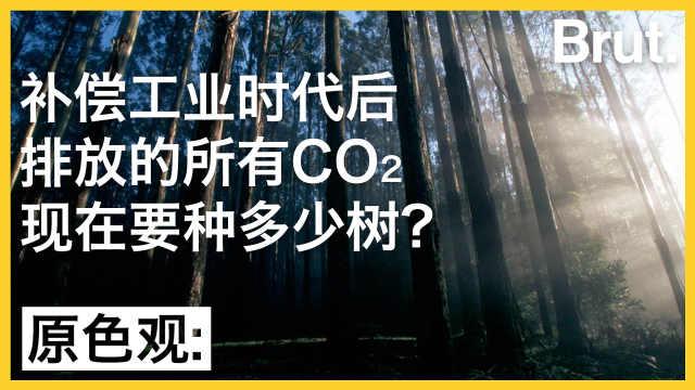 补偿工业时代后的碳排量要多少树?