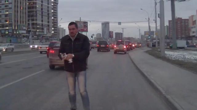 暖人!俄罗斯大叔勇闯车流救小猫