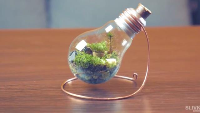 旧灯泡能做什么?当然是微观盆景!