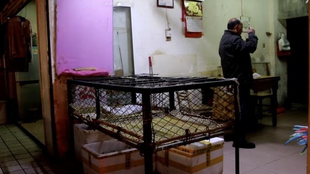 安徽H7N9确诊5例,多菜场停售活禽