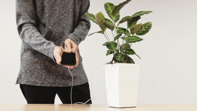 盆栽当充电器?光合作用为手机充电