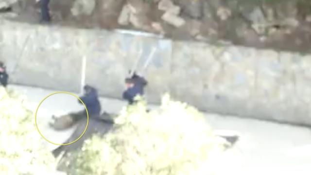 野猪闯景区惊吓游客,民警两枪击毙