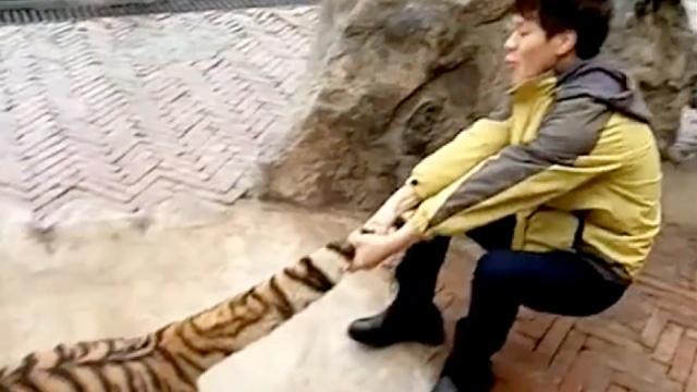 饲养员虐虎?地上有血?动物园回应