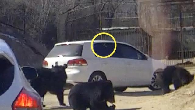 监拍北京黑熊趴车窗,车内有人投食