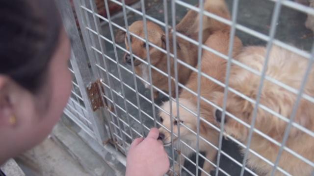韩寒王思聪赞助的流浪猫狗救助基地