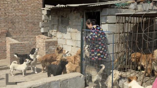 她养39只流浪狗,倾尽收入治病喂食