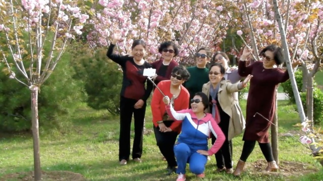 樱花绽放!大妈树下拍照,笑不拢嘴