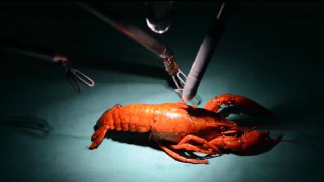 机器人剥的小龙虾,你一定没吃过