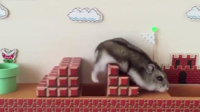 仓鼠版超级马里奥,布景音效给满分