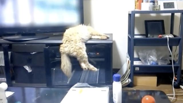 猫咪们的奇葩睡姿,是在下输了!