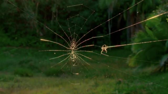 真·蜘蛛侠:水上造2米巨网捕食