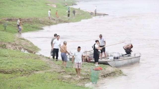 鱼塘被冲垮,村民黄河边冒险捞鱼