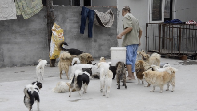女子收养700只流浪猫狗:别人扔我捡