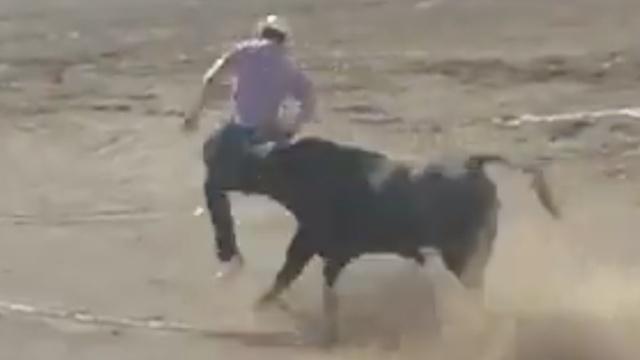 动物保护者冲进斗牛场,惨被牛撞伤