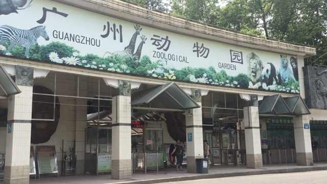 广州动物园关停马戏,表演却在继续