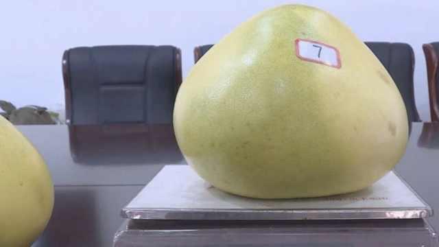 天价柚子王!这个13斤,卖了8万8