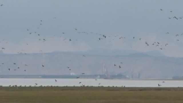 10万候鸟到鄱阳湖过冬,比往年要早