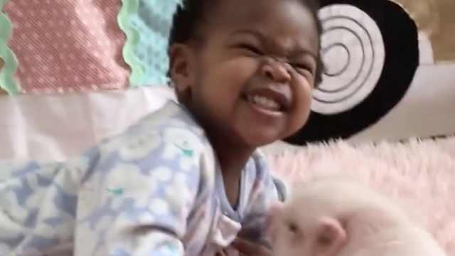 被小猪狂亲,萌娃满脸嫌弃表情亮了
