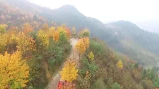 航拍!看3000亩彩色森林层林尽染