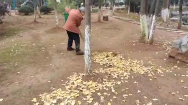 遍地落叶很美?环卫工:扫落叶最辛苦