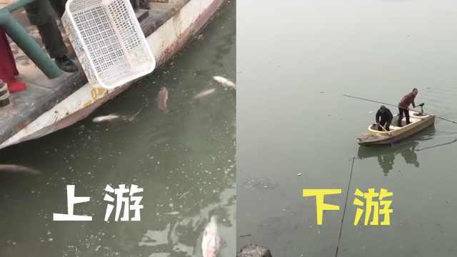 2万斤鱼被放生,市民划船打捞吼不住
