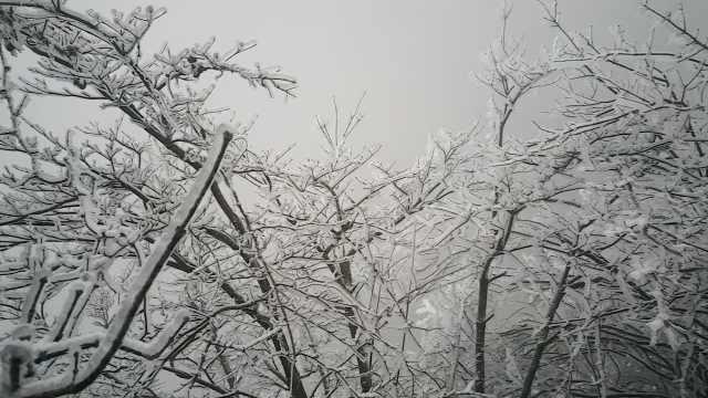重庆下雪啦!雪压枝头雾凇美如画