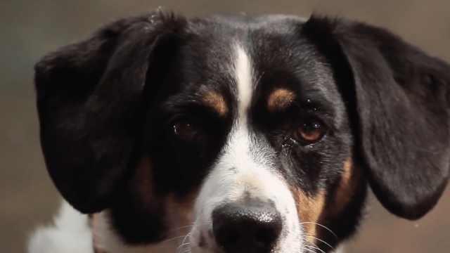 这6种讯号,证明你的狗狗真的爱你