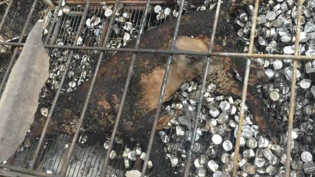 流浪狗收养场起火,她为救狗被毁容