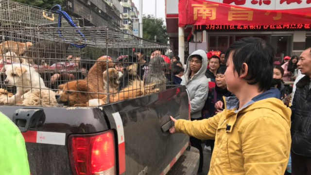 宠物领养日,爱心市民齐救助