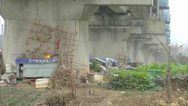 铁路桥下,居民挖塘开荒种菜