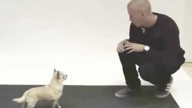 有趣!汪星人听人学的狗叫声啥反应?