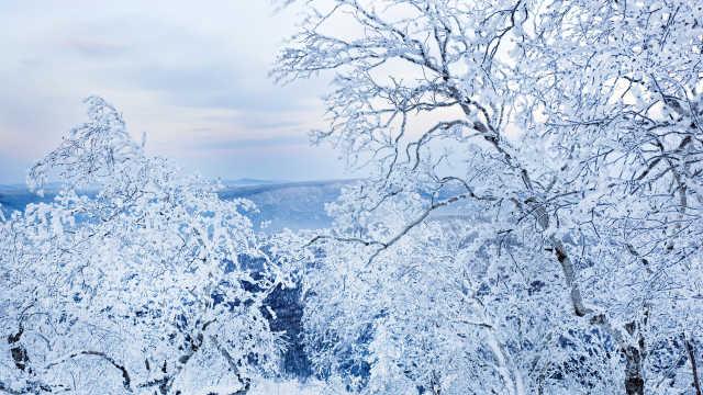 仙境!广西横县第一高峰现雾凇美景