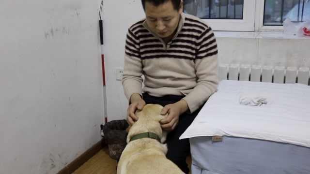 盲人借导盲犬出行:犬虽可爱,别打扰