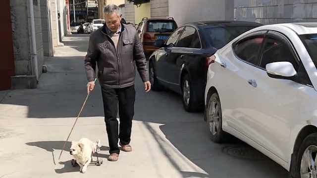 大爷给瘫痪爱犬装轮椅,每天陪散步