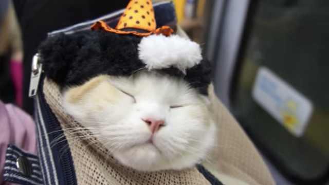 猫咪了解一下,喜欢钻包包的那种