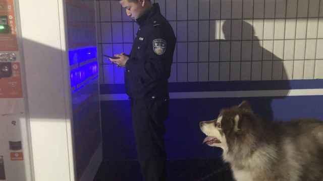 吃6个面包的狗狗,现被送警犬中队