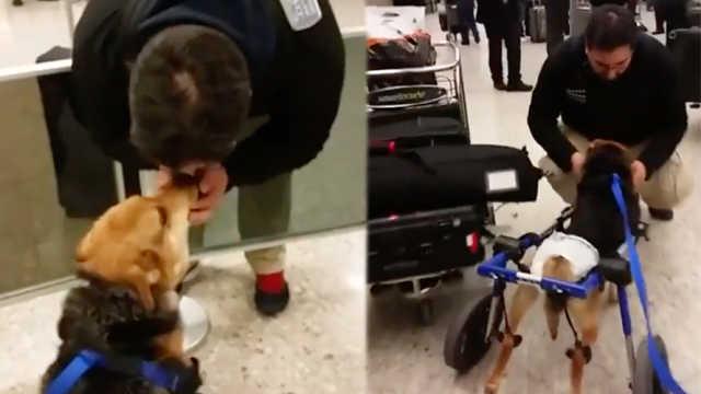 瘫痪汪机场迎接主人,场景太感人
