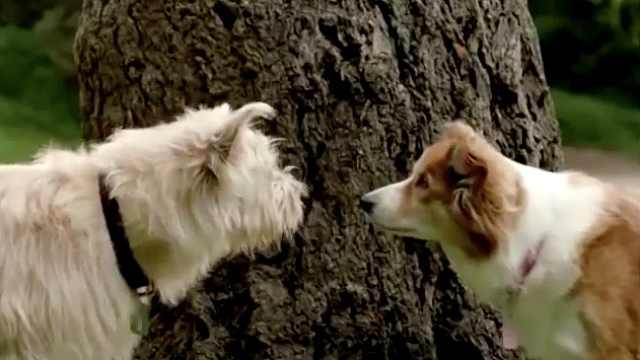 两只狗狗一见钟情后发生了什么?