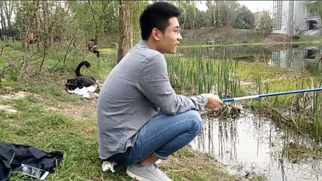 吃货!大学生校内池塘钓鱼:回去油炸