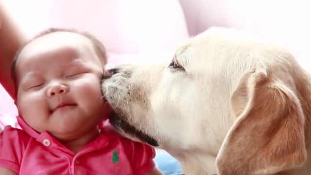 你会同意孩子从小和狗狗相处吗?