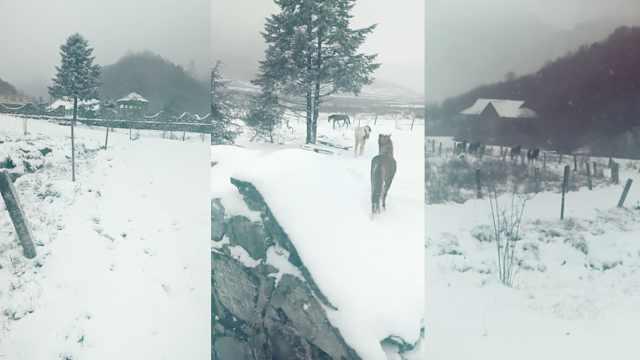 重庆4月飘雪见过吗?城口银装素裹