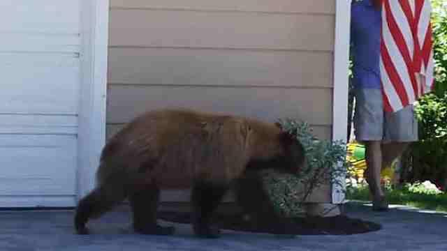 野外遇到熊怎么办?可别只会装死哦