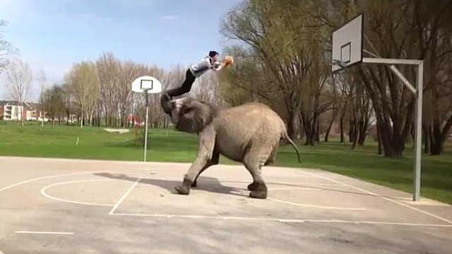 深藏功与名!大象助攻完成大灌篮