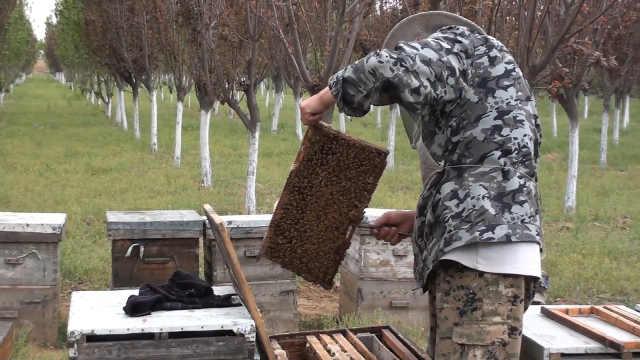 老汉祖传养蜂技艺无人愿学濒临失传