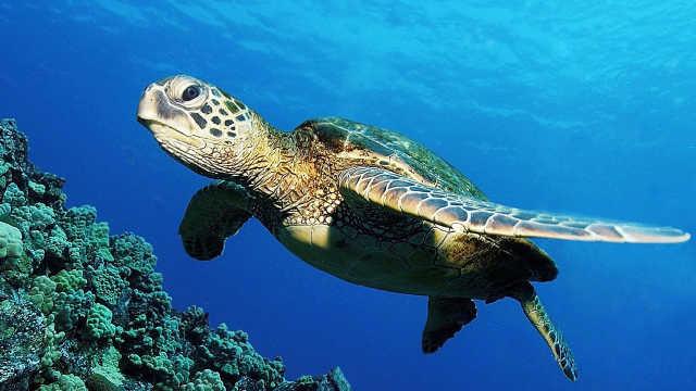 海龟被困渔网,潜水员助其重获自由