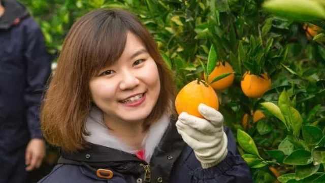 剑桥女博士回乡种橙,一年卖4000万