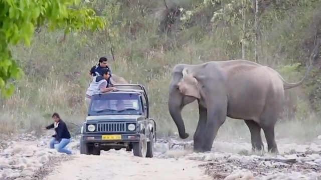 大象:逗你们玩的啦,别慌别慌