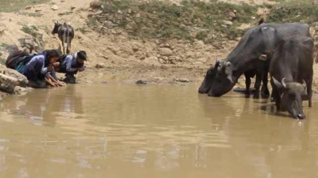 印度缺水,人和动物竟共饮一池雨水
