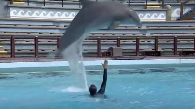 BBC:被圈养的海豚是否感到快乐